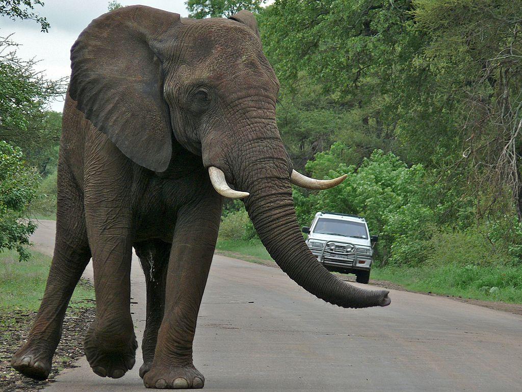 elefante na beira de uma estrada