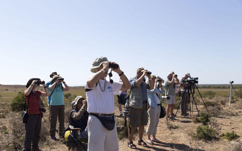 Observadores de aves com binóculos