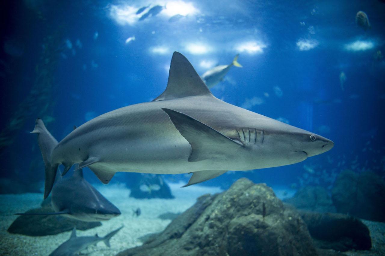 um tubarão dentro do oceanário