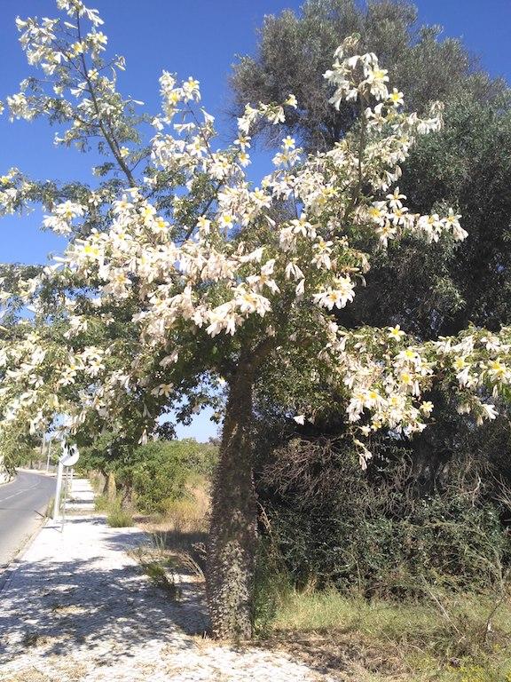 árvore coberta de flores brancas