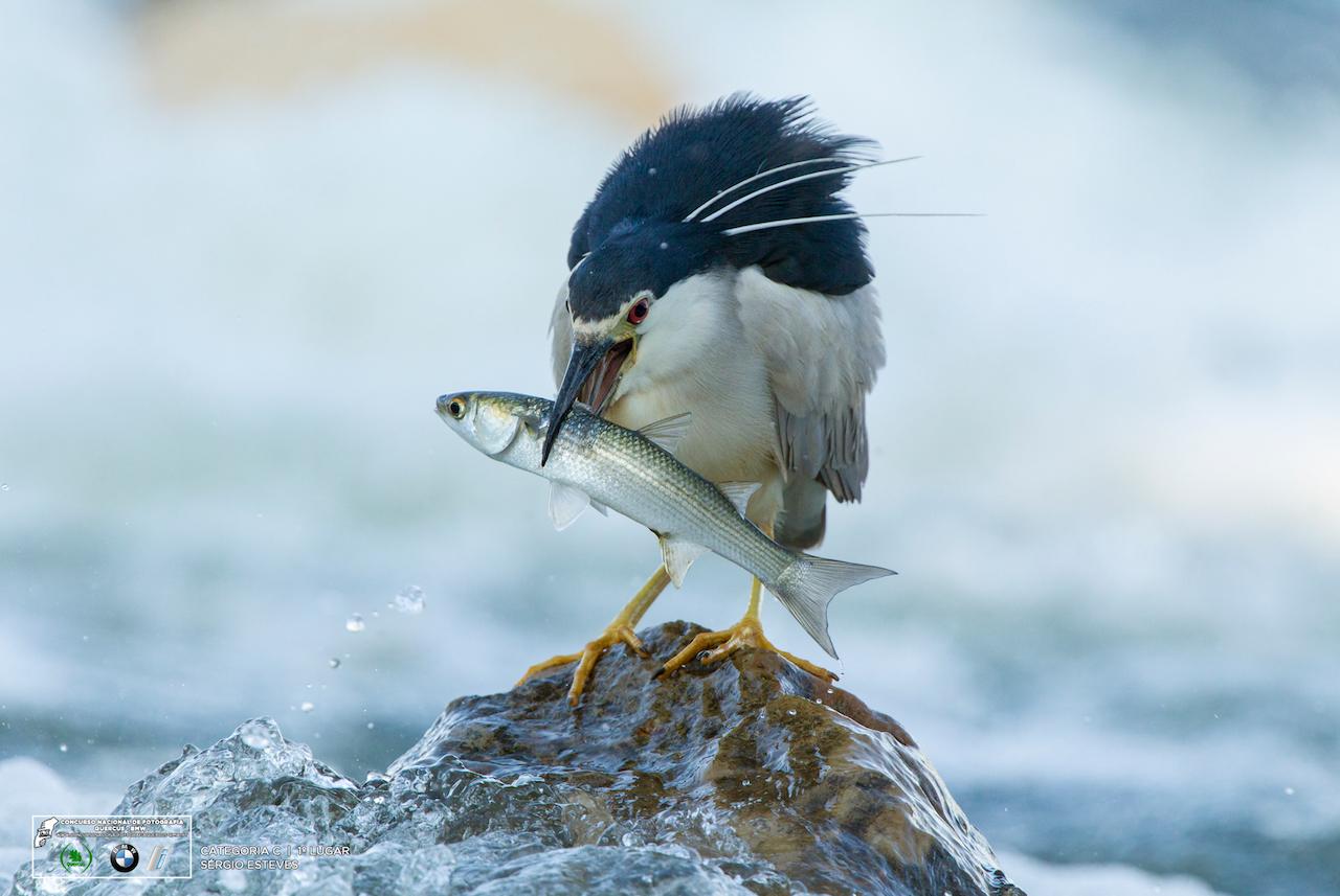 ave com peixe no bico