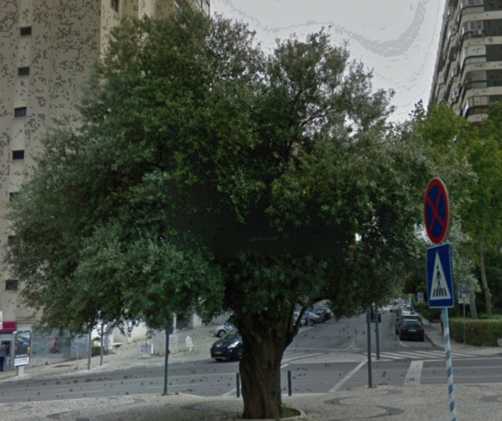 oliveira numa praça urbana