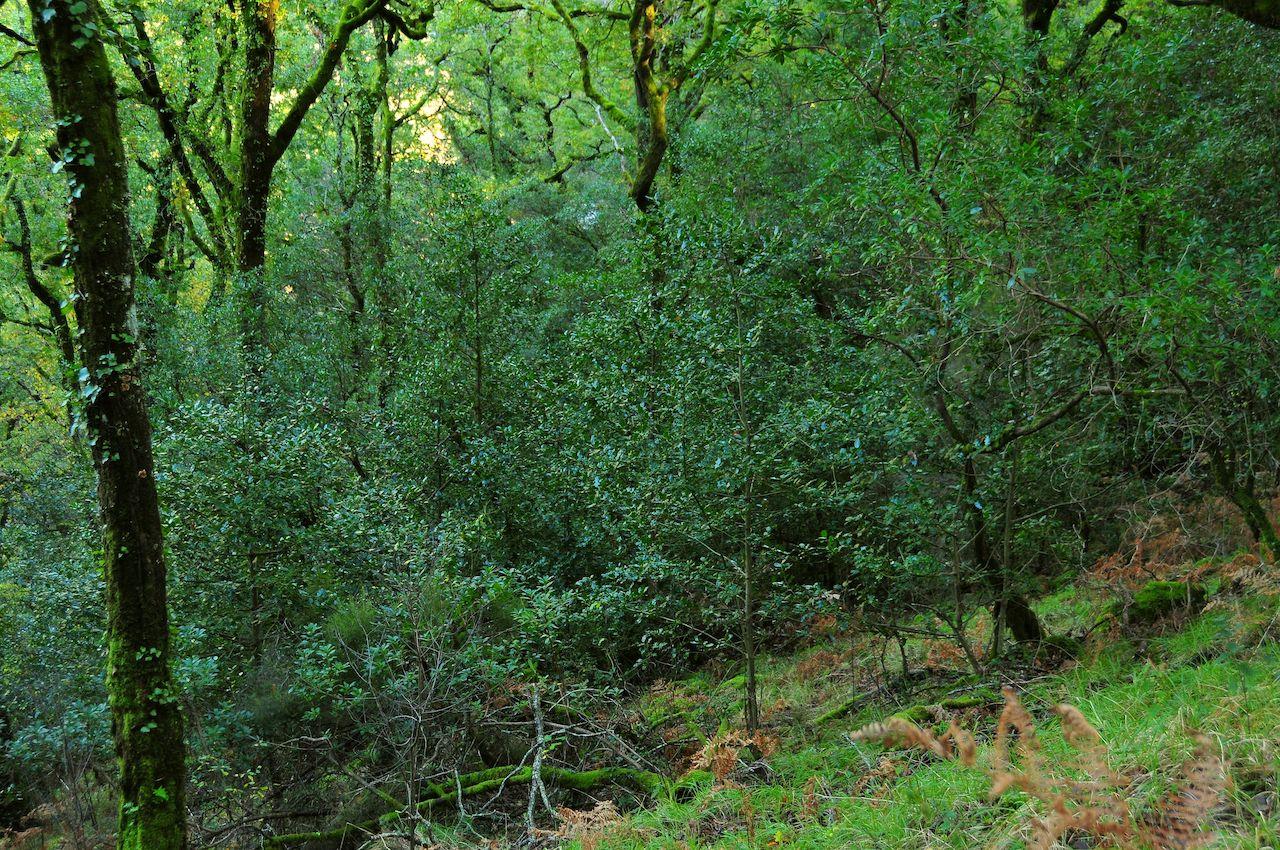 pequenas árvores e arbustos
