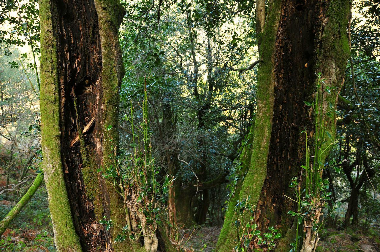 troncos de árvores com musgo