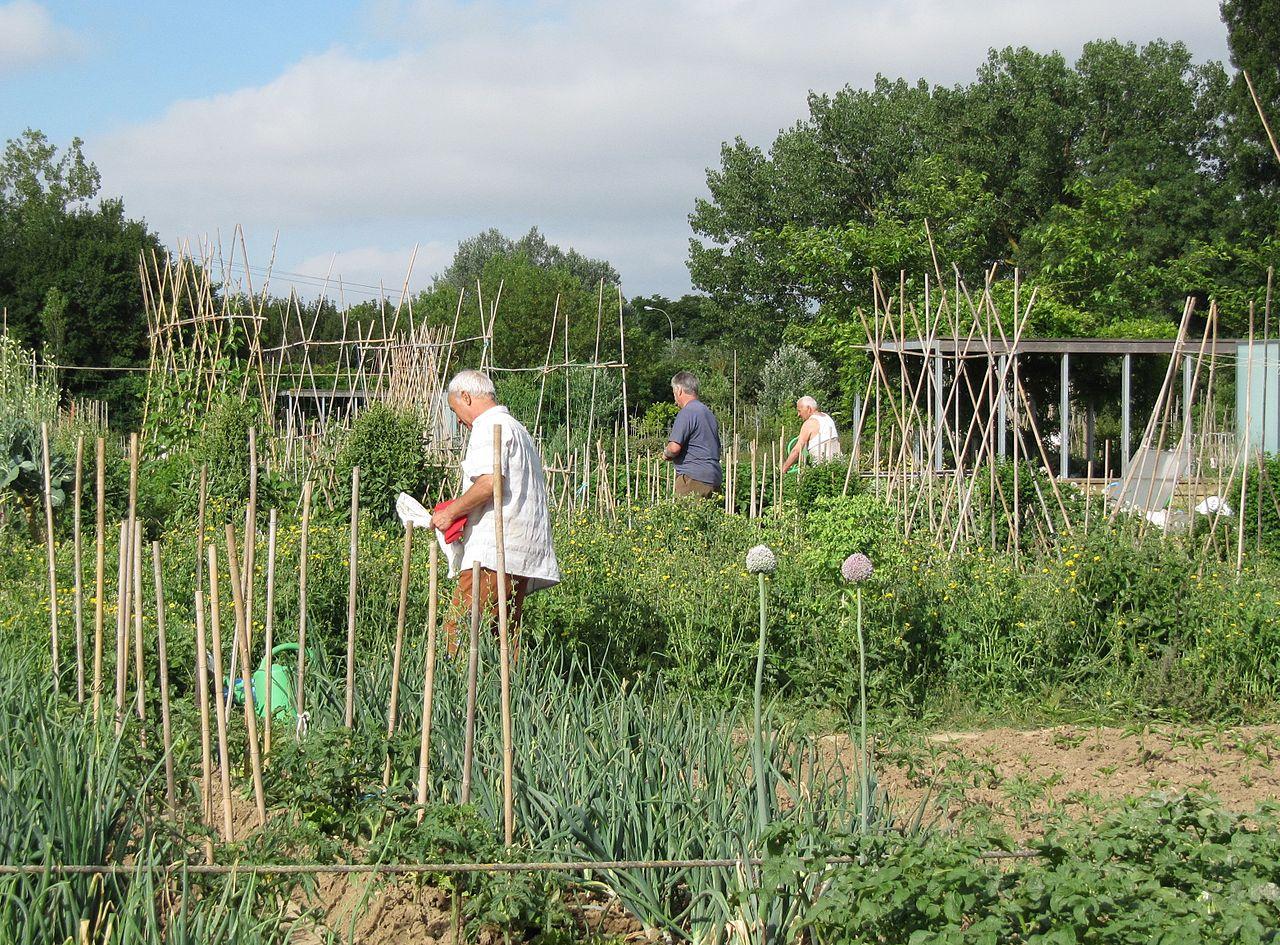 espaço de hortas urbanas