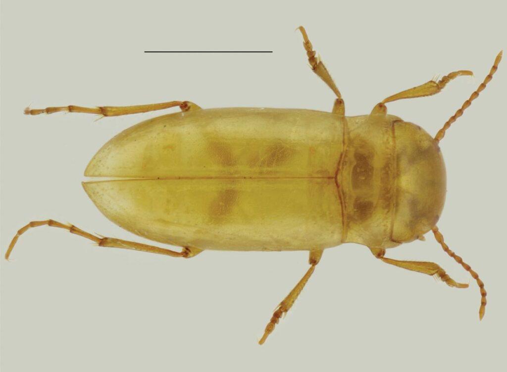 escaravelho visto de cima