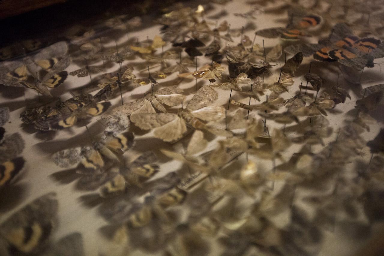 Colecção de borboletas