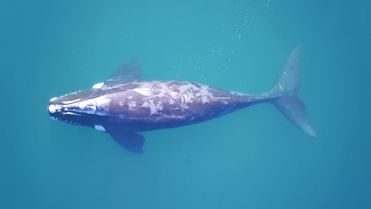 baleia dentro da água