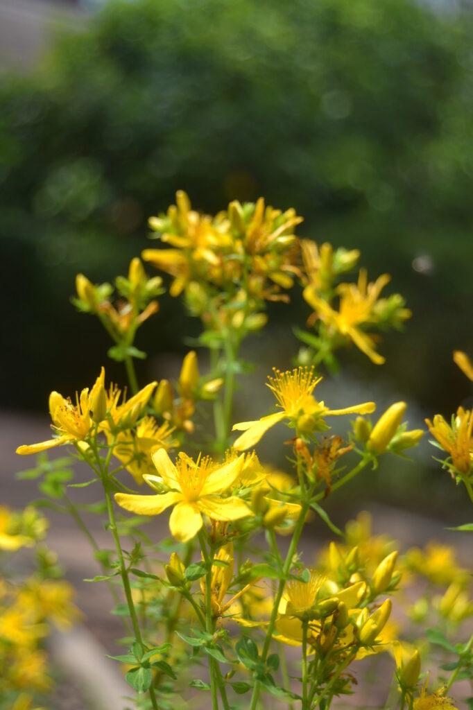 Na semana do Dia Internacional do Fascínio das Plantas, a Wilder desvenda-lhe as espécies nativas que especialistas no mundo botânico desejam observar.