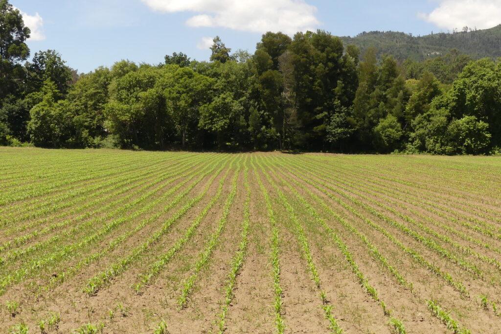terreno plano cultivado